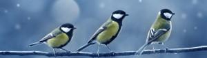 cropped-3birds